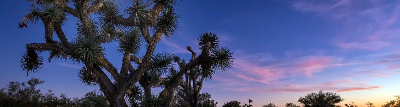 Arizona Joshua Tree   CEBImagery [FlickrCC]